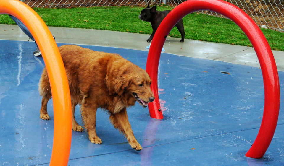 Your furry friends will love these 32 dog parks in Alabama