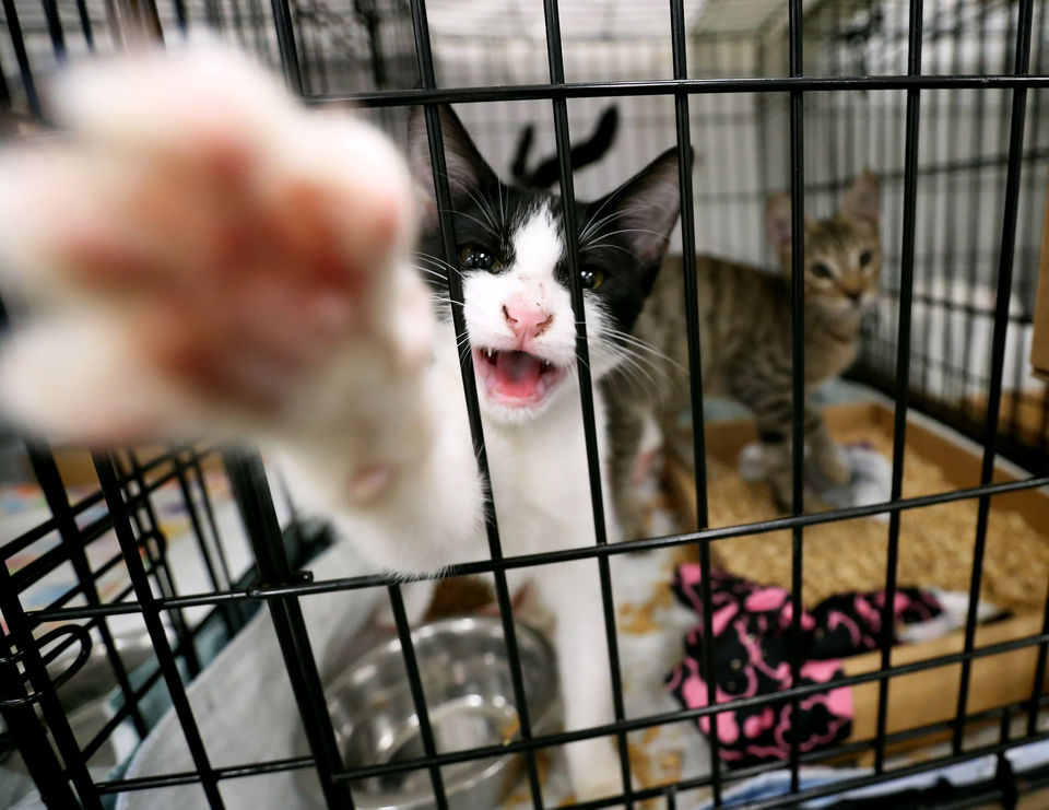 Meet the cats who survived the Bahamas' hurricane. Now they're in N.J. and need your help.
