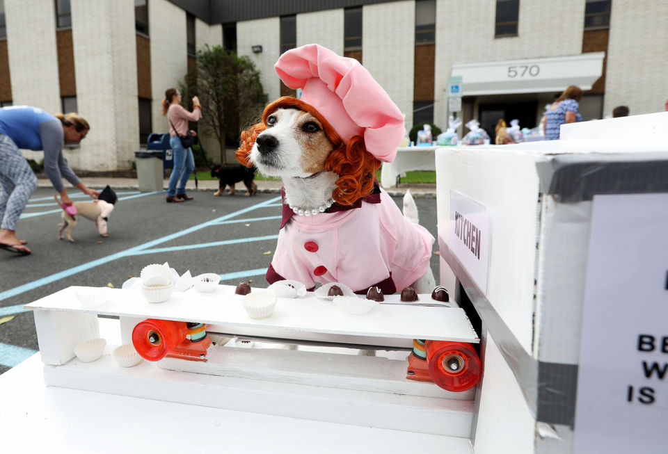 Lucy, Superman, and a taco? These canines dressed up for a good cause