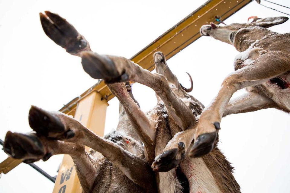 Ranking the best 25 best deer hunting regions from last season