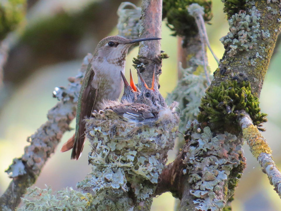 What's in your backyard? How to identify 11 Oregon birds by
