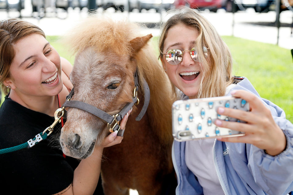 Students saddled with finals stress got a day to 'horse' around on N.J. college campus
