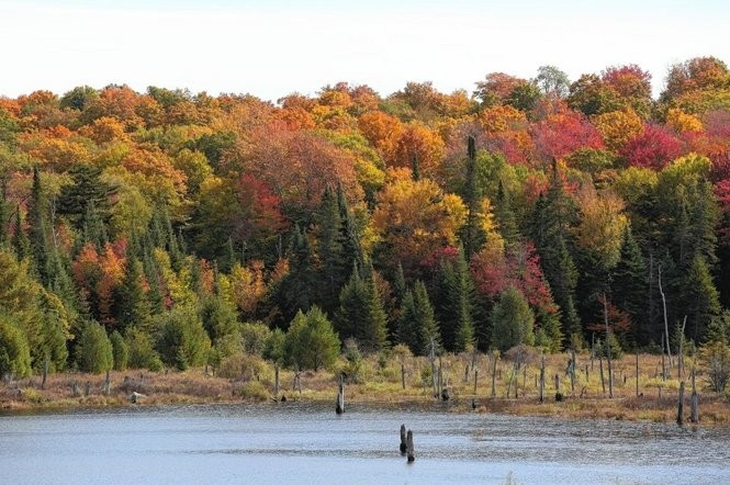Fall foliage in the Essex Chain of Lakes area in Newcomb in the Adirondack Park.