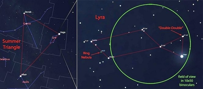 Finding Lyra the Harp is easy once you've found the Summer Triangle. In 10x50 binoculars, splitting the double-double into two bright stars should be easy, while finding the faint Ring Nebula may be a challenge for new observers.