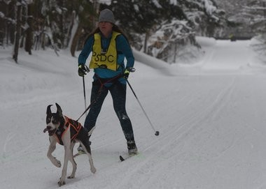 Sperry said skijoring is ideal for many dogs who love to run and the work entailed. This photo of an unidentified competitor was taken at the 2017 Tug Hill Challege held at Winona State Forest in Mannsville.