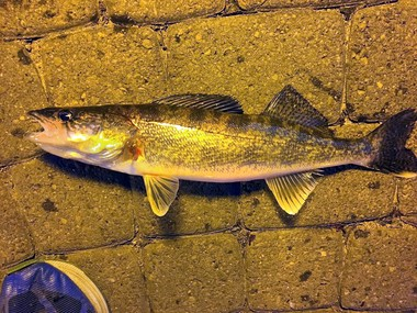 NYup.com outdoors writer David Figura caught and released this 13- to 14-inch walleye while fishing off the village pier at the northern end of Skaneateles Lake.