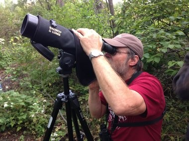 Steven Benedict, of Newark, uses his spotting scope to check out a black-billed cuckoo on a wooded path at the Montezuma Audubon Center during the 2014 Montezuma Muckrace.