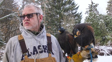 Al Jordan gets ready to hunt with this two Harris's hawks, Z and Kitt. Jordan put hoods on their heads to calm them down for transport to the hunting area and to give him time to get ready prior to the hunt.