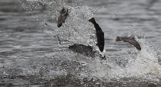 20K trout will be stocked in N J  waters for fall  Find out