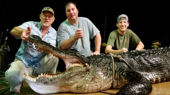 Scott Evans, Jeff Gregg and Justin Gregg, 15, snagged an estimated 900-pound alligator during the first-day of gator hunting on Lake Eufaula on Aug. 14, 2015 (Submitted)