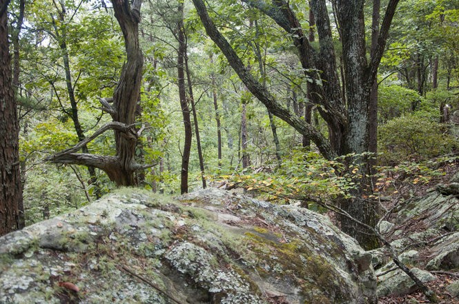 This 225-acre tract of land on Double Oak Mountain was recently purchased from the Smyer family by the Freshwater Land Trust, in an agreement that will keep a 2-mile stretch atop the ridge protected from future development. (Photo by Zac Napier, Freshwater Land Trust)