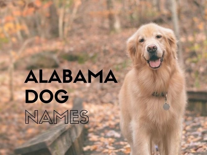 25 Alabama dog names that are perfect for your southern pet - al com