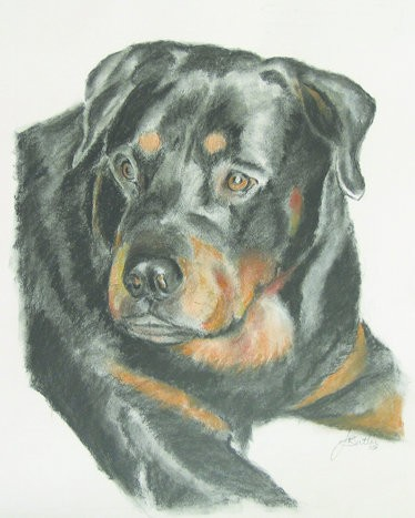 Commission the perfect pet portrait from these Birmingham