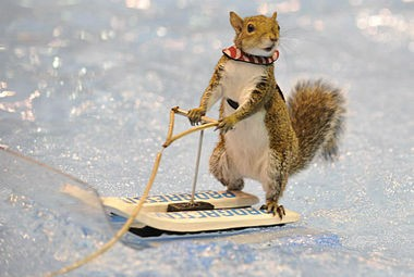 Twiggy the Water-Skiing Squirrel will perform Sunday, July 14, at the Tennessee Valley Hunting and Fishing Expo in Huntsville. (Bob Gathany/bgathany.com)