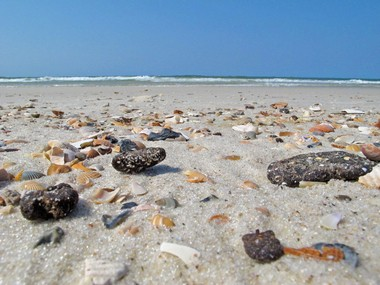 In this June 2012 file photo, tarballs are mixed with seashells along the beach on the uninhabited portion of Dauphin Island. With the amount of tarballs found along Alabama beaches on the decline, oil cleanup operations are moving toward a new phase, one that does not include BP crews patrolling the beaches. Soon cleanup crews in Orange Beach and Gulf Shores will only respond to National Response Center (NRC) reports generated by the public by calling 1-800-424-8802 or reporting online at www.nrc.uscg.mil, After a deep clean is finished on Dauphin Island's west end, that area will also shift to the NRC reporting process. Patrols will continue on the Fort Morgan peninsula for the foreseeable future.
