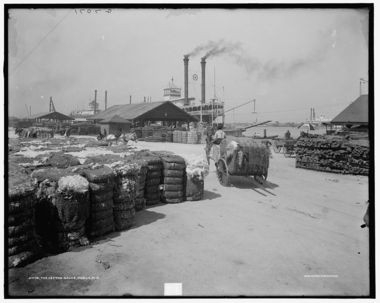 The Mobile docks and cotton. (The Library of Congress, Prints & Photographs Division, Detroit Publishing Company Collection)