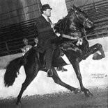 The Alabama Legislature proclaimed the racking horse as the Official State Horse for the State of Alabama on October 5, 1975. (Contributed by Alabama Department of Archives and History)