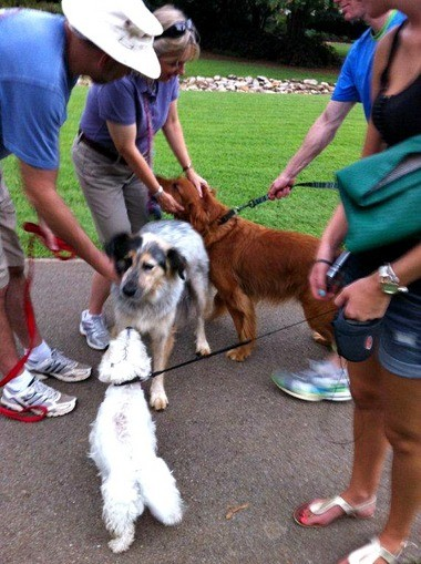 Man's best friends will enjoy an evening of cool stuff in the Huntsville Botanical Garden.