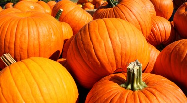 The sights, sounds and tastes of fall will be celebrated at Fresh from the Garden.