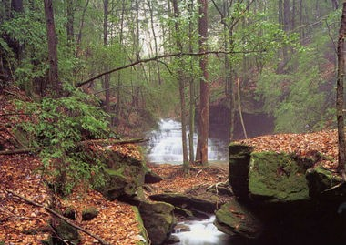 Eagle Creek in the Sipsey Wilderness in Bankhead National Forest (AL.com/File Photo)