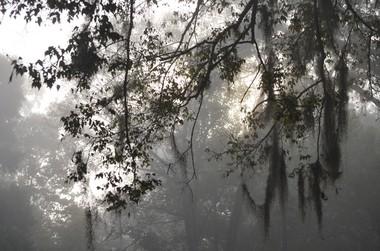 Early Morning Mist at Lanark Nature Center (Boris Datnow)