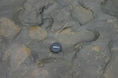 Undated handout photo issued by the British Museum Friday Feb. 7, 2014 of some of the human footprints, thought to be more than 800,000 years old, found in silt on the beach at Happisburgh on the Norfolk coast of England, with a camera lens cap laid beside them to indicate scale. (AP Photo/British Museum)