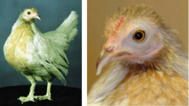 Matilda, owned by Keith and Donna Barton of Bessemer, was certified as the World's Oldest Chicken. She died in 2006 at the age of 16. (Wikimedia Commons)