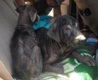 Link and Birdie were rescued after being dumped near the Boaz Golf Club. (Contributed by 2nd Chance Shelter)