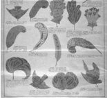 A page from a Victorian feather catalog. Songbirds are going for 10 cents each, while the more elaborate feathers cost just as much per feather.