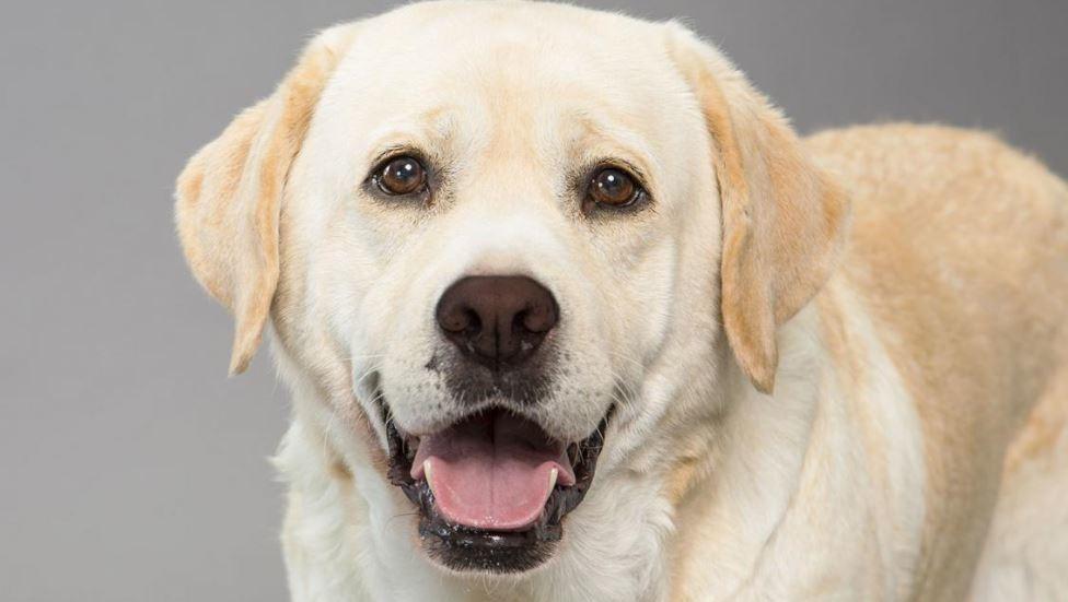 3 most popular dog breeds in Alabama - al com