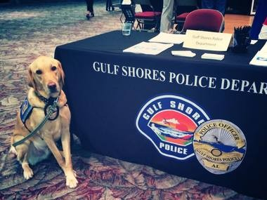 K9 Officer Mason, 3, died after heat exposure, according to a report. (GSPD)