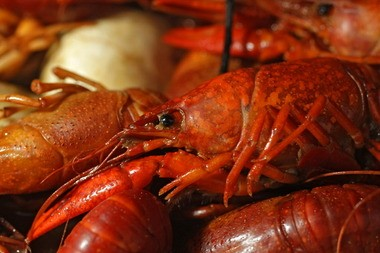 Crawfish boils are a popular attraction in Mobile and elsewhere along the Gulf Coast. But