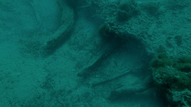Alabama's 60,000-year-old underwater forest spills its