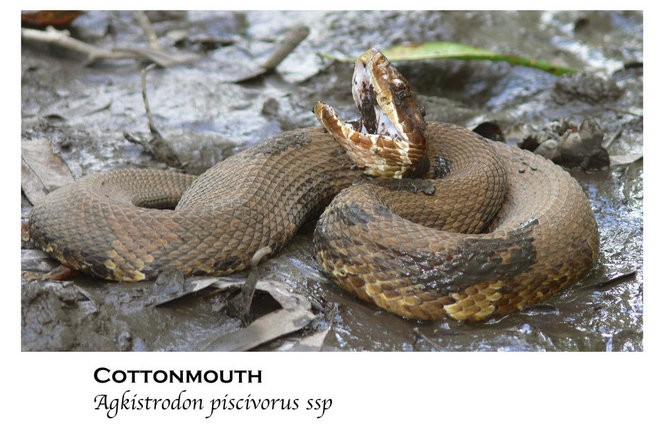 50 snakes you might come across in Alabama