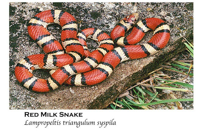 50 Snakes You Might Come Across In Alabama Al Com