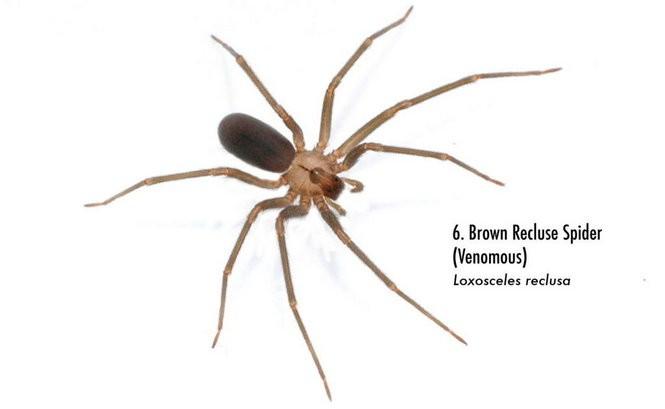 Spiders of Alabama: 58 spiders you should know - al com