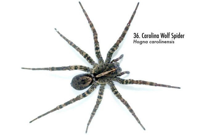 Spiders of Alabama: 58 spiders you should know - al com