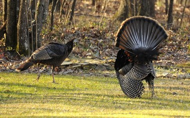 William Oppenheimer, who made the six-hour drive from Mobile to address the board, said he still questions the board's decision to reduce fall turkey hunting, but is also glad to have the 20 days to hunt. (Joe Songer/jsonger@al.com)