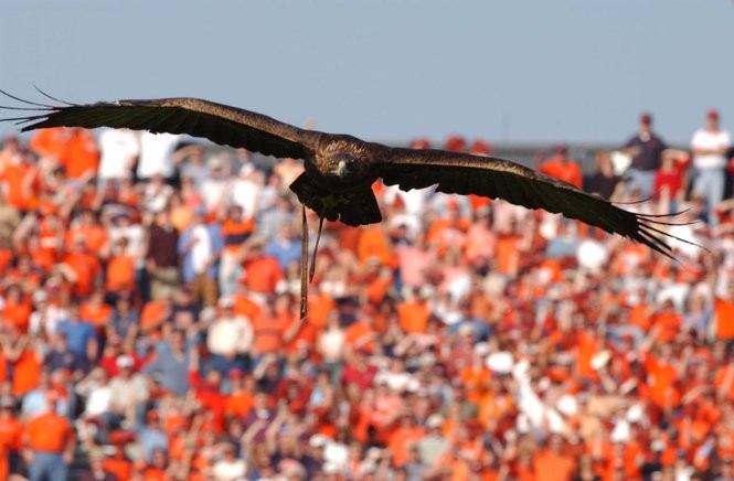 War Eagles Of The Past A Brief History Of Auburns High Flying