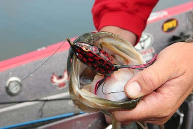 Frogs are weedless lures that are designed to go through the thickest of cover without snagging, ideal for the weed mats of Guntersville.