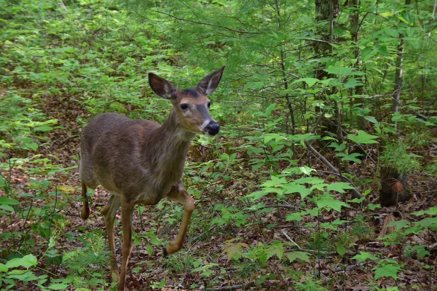 Alabama DCNR to check deer for CWD in northwest counties - al com