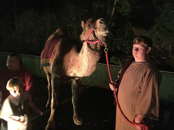 This camel from T&N Acres in Blount County will be the star of the Epiphany Pageant on Friday night, Jan. 5, the Eve of Epiphany, at St. Mary's on the Highlands Episcopal Church in Birmingham, Ala.