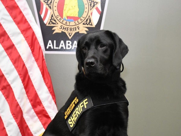 """Banner"" the dog is the newest -- and arguably the most popular -- member of the Madison County sheriff's office."