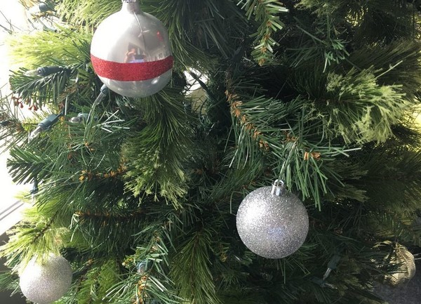 Where can you recycle your live Christmas tree? (File)