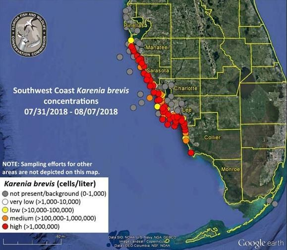 Red tide conditions remains in much of southwest Florida. (Contributed photo/State of Florida)