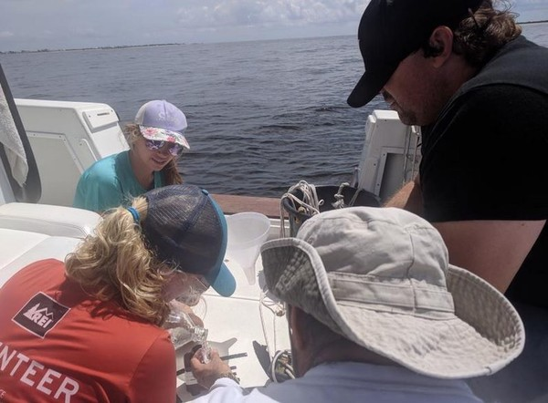 The Mote Marine Laboratory and Aquarium phytoplankton ecology team, together with Florida Fish and Wildlife Conservation Commission's Harmful Algae Blossom researchers, conducted a red tide survey along the Florida Gulf coast. Samples were collected at 19 stations spanning from the mouth of Tampa Bay to the mouth of the Caloosahatchee. (Contributed photo/FFWCC)