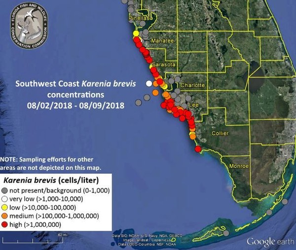 Red tide update: Florida governor issues emergency order   al.com