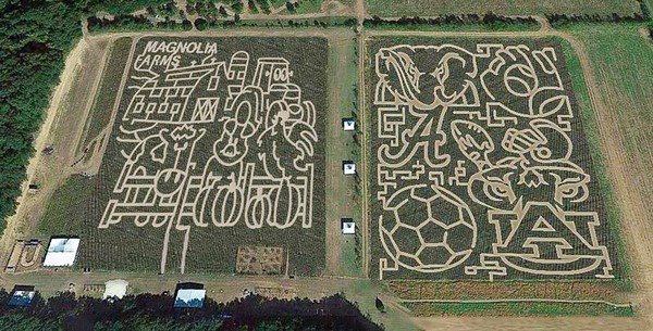 For October 2017, the Magnolia Corn Maze in Summerdale celebrates farm life and Alabama and Auburn college sports. (Photo provided by Magnolia Corn Maze)