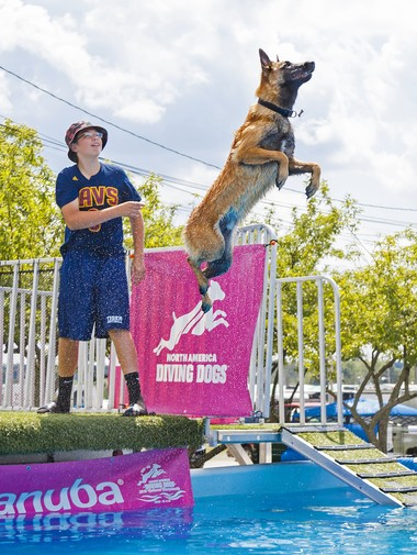 Zakary Filler, 15, from Twinsburg, and 18-month-old Duke were named the top junior handler team at the 2016 American Kennel Club North American Diving Dogs National Championship in Orlando and placed 3rd in the Masters Division out of more than 80 dogs that earned invitations to compete.