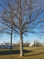 The city of Avon is asking residents to find the biggest tree in the city.